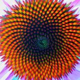 nature-design -phyllotaxis_small